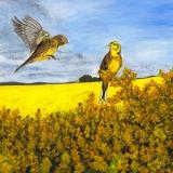 Yellowhammers-print-aug-2020-l